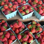 Strawberry Cycle 2015