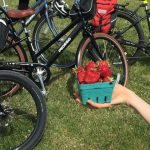 Strawberry Cycle 2018